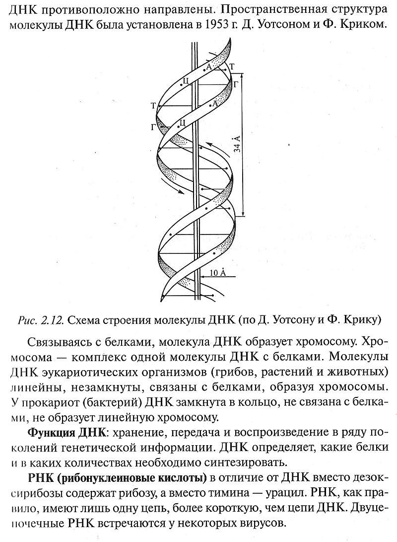 Жизнь и химический состав живых организмов