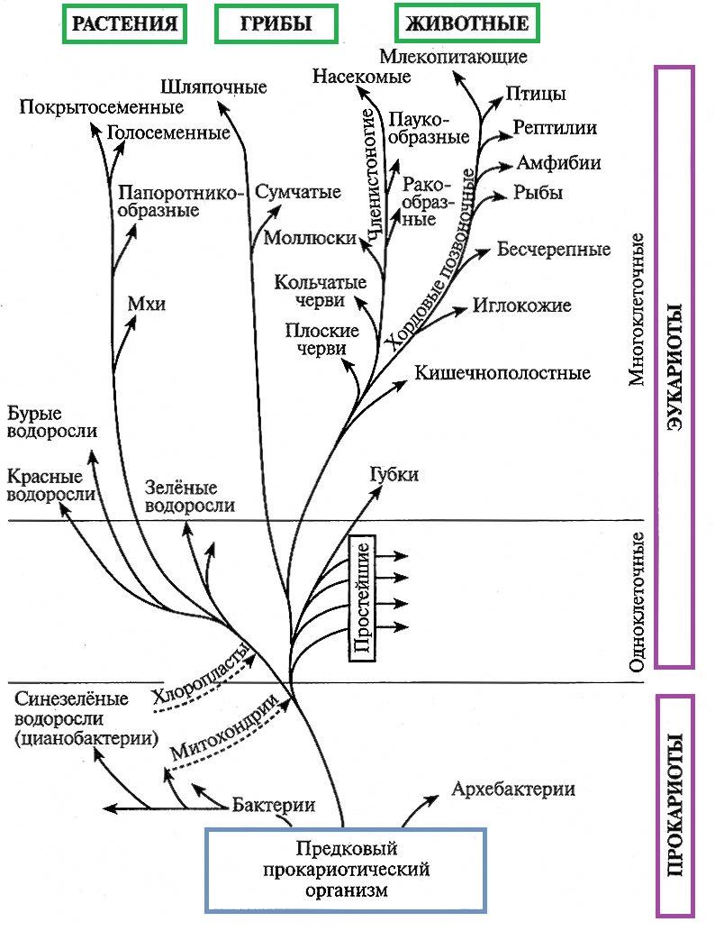 Эволюция органического мира