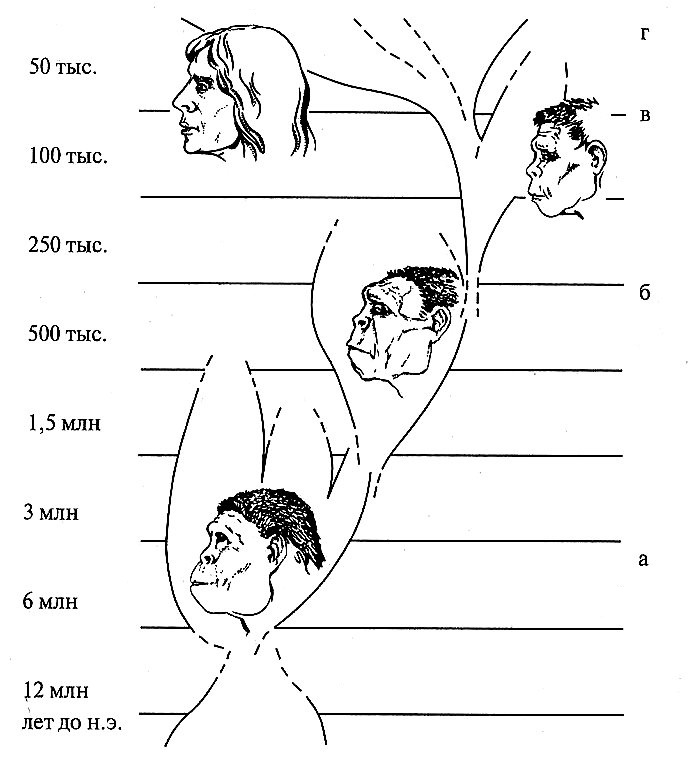 Основные этапы эволюции человека