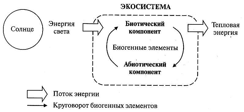 Функциональная схема экосистемы