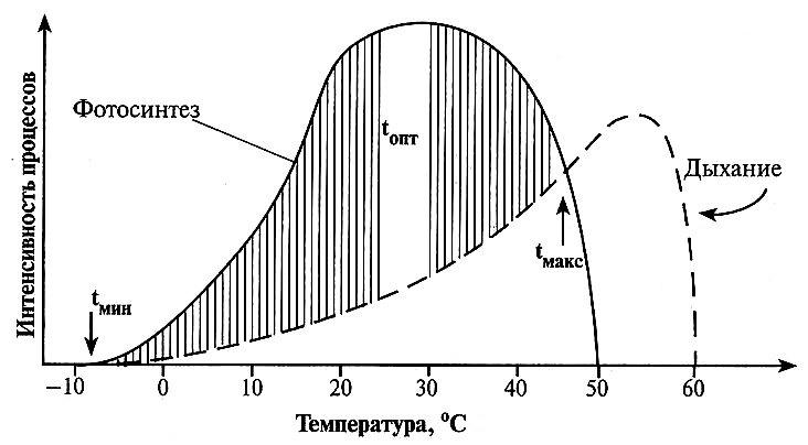 Схема зависимости фотосинтеза и дыхания растения от температуры