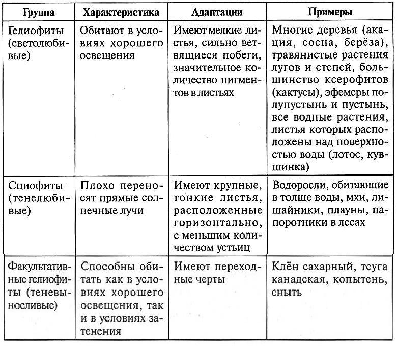 Классификация растений по отношению к условиям освещённости