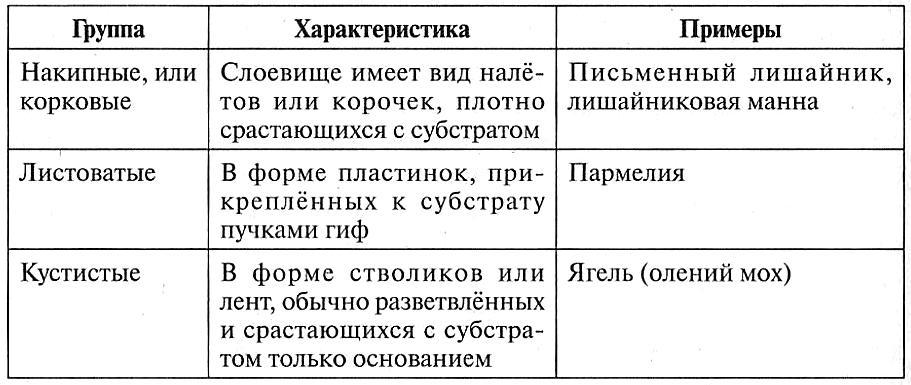 Классификация лишайников по строению