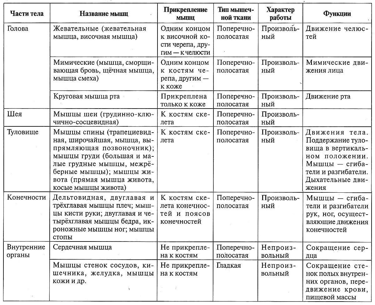 Таблица 12.11. Мышцы человека