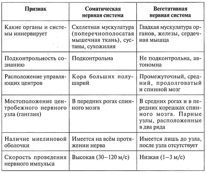 Таблица 12.19. Сравнительная характеристика отделов периферической нервной системы