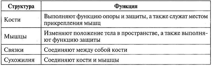 Таблица 12.4. Части опорно-двигательной системы