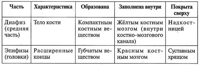Таблица 12.6. Строение длинной трубчатой кости