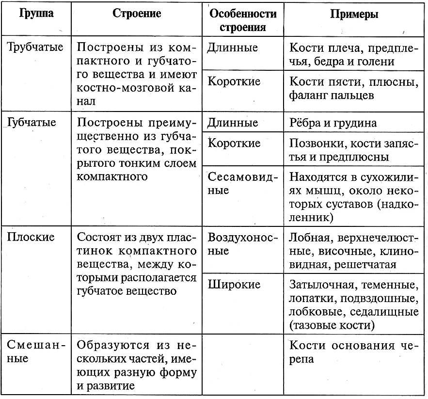 Таблица 12.7. Классификация костей