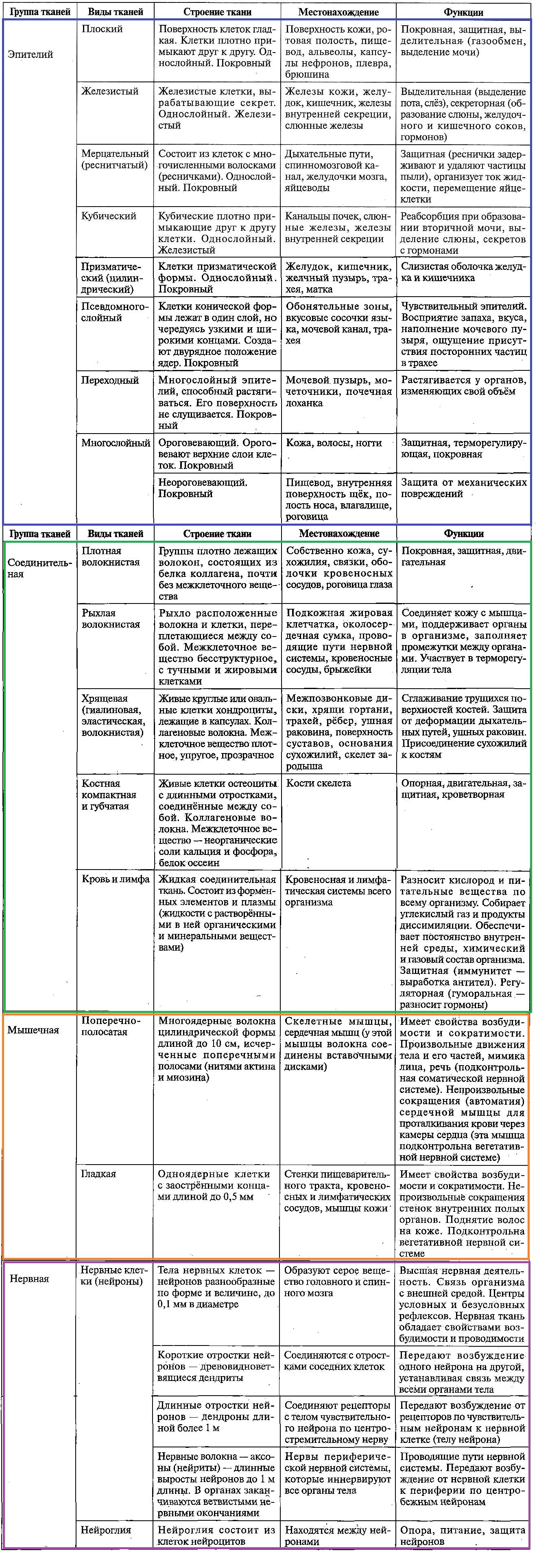 БИОЛОГИЯ ЧЕЛОВЕКА. Часть 1. Ткани человека